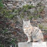 Gatti, un gatto nel Castello di Santa Severa